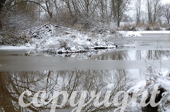 Verschneiter Biberbau am Wasser, von Eis umgeben