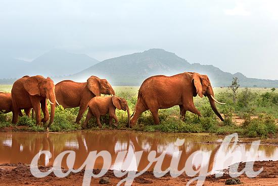 Elefanten