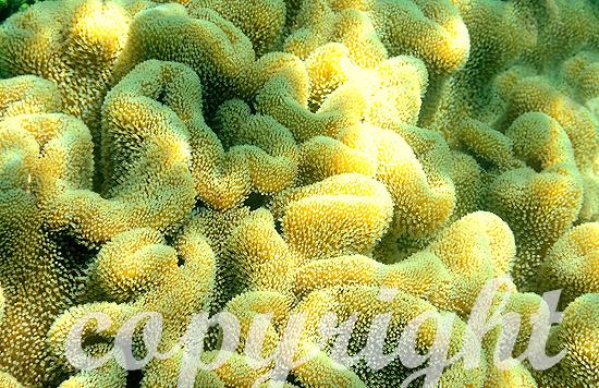 Malediven, Korallen