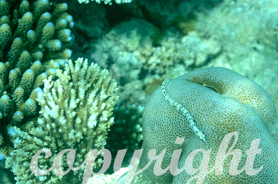 Malediven, Submarine