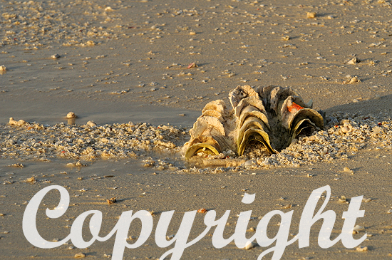 Beachcombing oder Strandspaziergang mit Muschelsuche