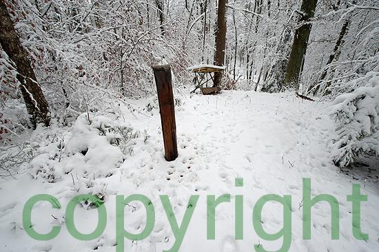 Winterruhe in Feld und Wald