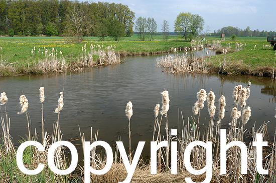 Jagdliche Einrichtungen in frühlingshaften Biotop