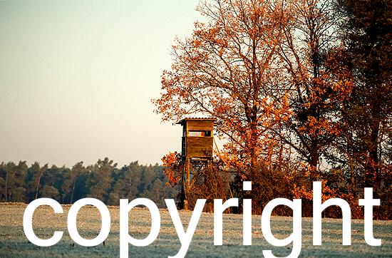 Herbstimpressionen im Revier